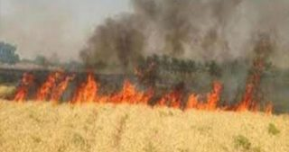 Le IOF bruciano vaste aree agricole nella Valle del Giordano