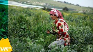 I palestinesi creano un campo di protesta nell'area di Al-Aghwar sfidando il piano di annessione israeliano