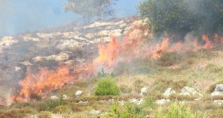 Banda di coloni incendia vaste aree agricole a Nablus