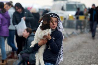 Israele blocca vendite di agnelli palestinesi nella Valle del Giordano