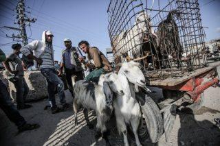 Gaza ha pochi agnelli per la Eid Al-Adha