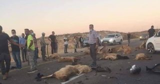 Pastore e pecore a Yatta investiti da colono