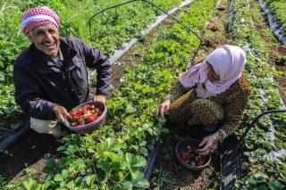 WES appoggerà Palestina per ottimizzazione dell'uso dell'acqua