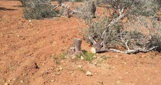 IOF sradicano centinaia di alberi in una foresta