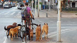 """L'""""Animal-washing"""" israeliano: da Tel Aviv, città più """"dog-friendly"""" del mondo, allo specismo sionista"""