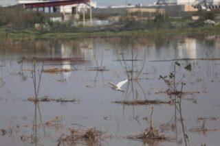 Gaza subisce perdite di 1,5 milioni di dollari dopo che Israele ha causato le inondazioni