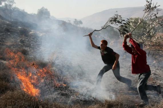 Coloni incendiano fattorie palestinesi in Cisgiordania