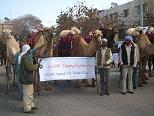 Gli animali manifestano per difendere i diritti umani