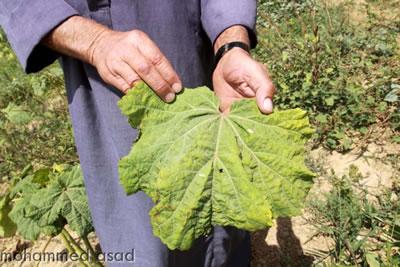 Sostanze tossiche e cancerogene. Il suolo della Striscia di Gaza non è adatto all'agricoltura